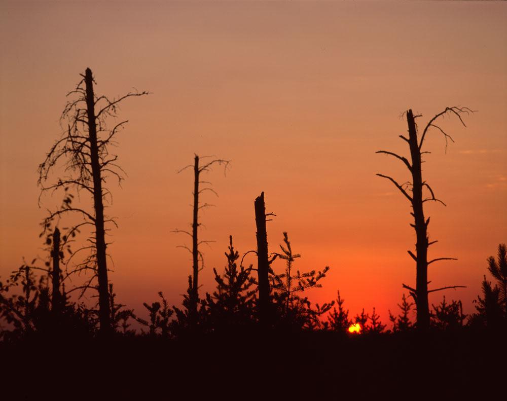 """Beltrami Island State Forest"""
