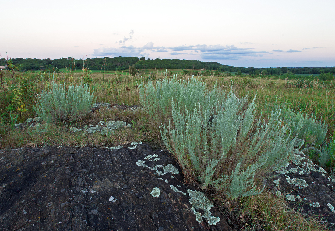 Sagebrush on Gneiss Outcrops