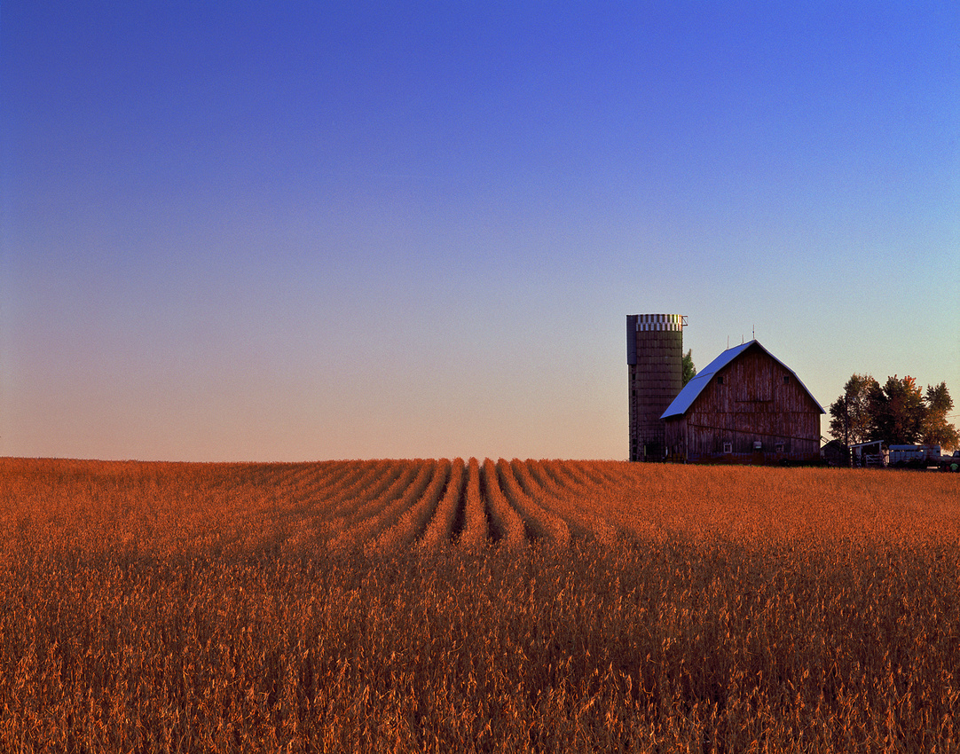 Minnesota Farm Scene 2011