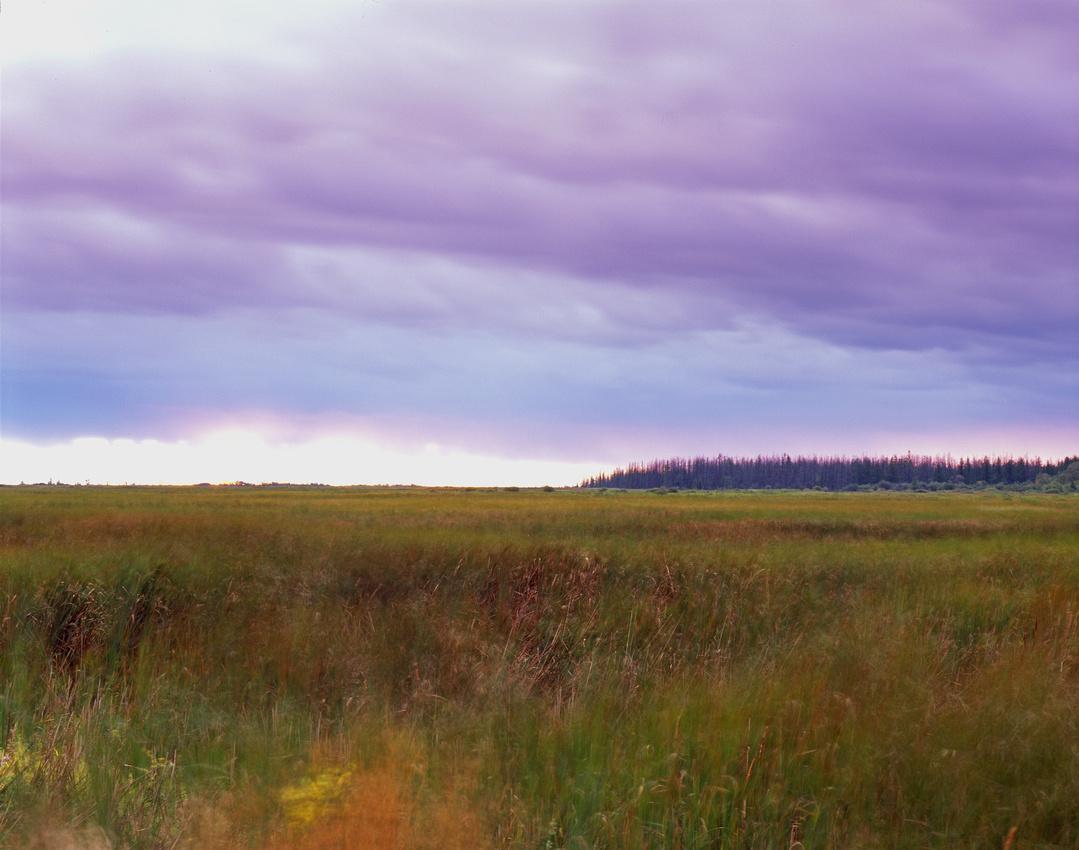 Lake Roseau Wildlife Management Area