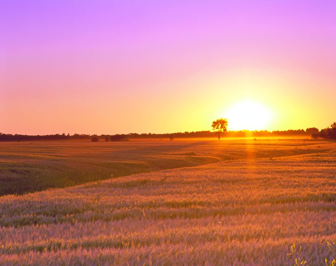 Wannaska Sunset