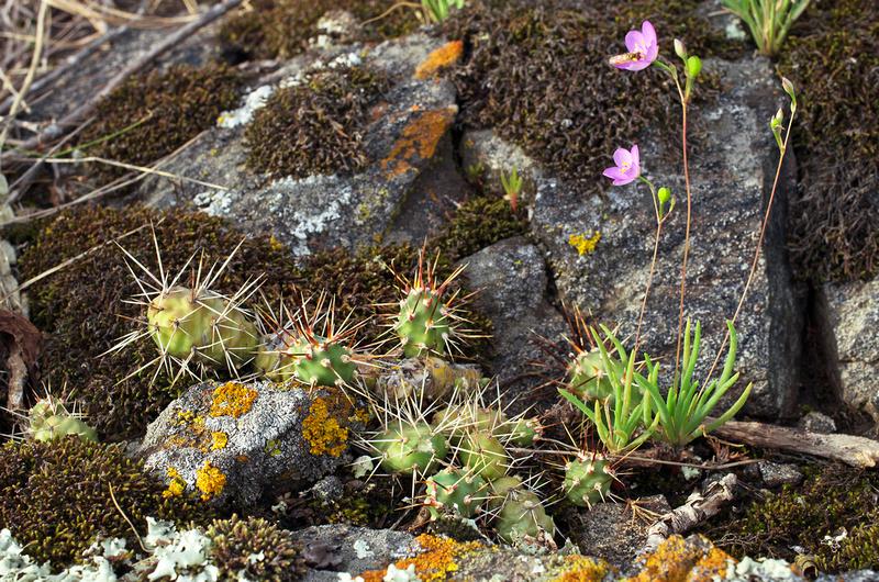 Gneiss Outcrops SNA